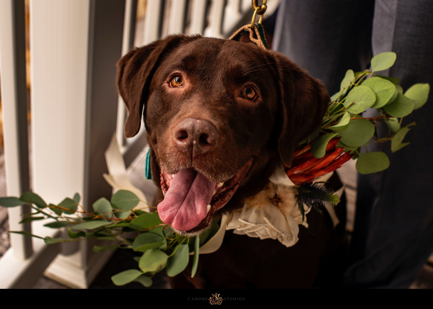 Dog with flower collar getting ready to walk down the aisle